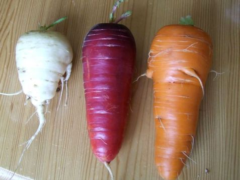 Carrots of every color